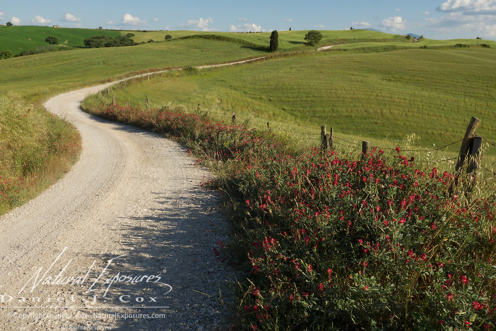 A country road meanders off across the tuscan landscape near Montepulciano, Italy
