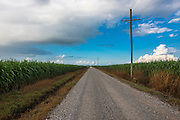 Melodia Plantation Road is in the vicinity of Chroma, Louisiana, which is not far from Houma. The fields are sugar cane.
