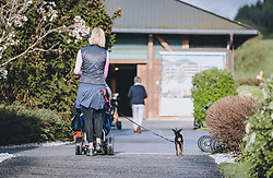 THEMENBILD - Golferin mit Hund auf dem Weg zum Golfplatz. Golfplätze dürfen ab heute nach dem Lock Down wieder öffnen, aufgenommen am 01. Mai 2020 in Zell am See, Oesterreich // Golfer with dog on the way to the golf course. Golf courses are allowed to reopen after the lock down in Zell am See, Austria on 2020/05/01. EXPA Pictures © 2020, PhotoCredit: EXPA/ JFK