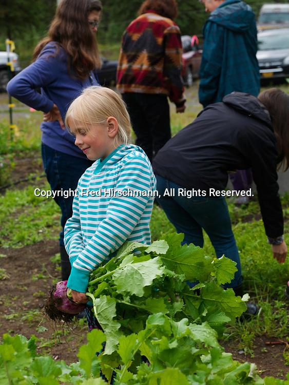 Xx Meeuwsen with freshly harvested turnup from Rebecca Steadman's garden, Glacier View, Alaska.