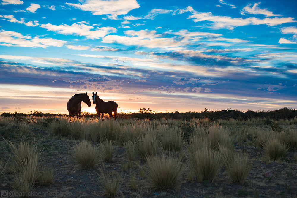 Horses roam free at Estancia El Deseado near Puerto Madryn, Chubut, Patagonia, Argentina.