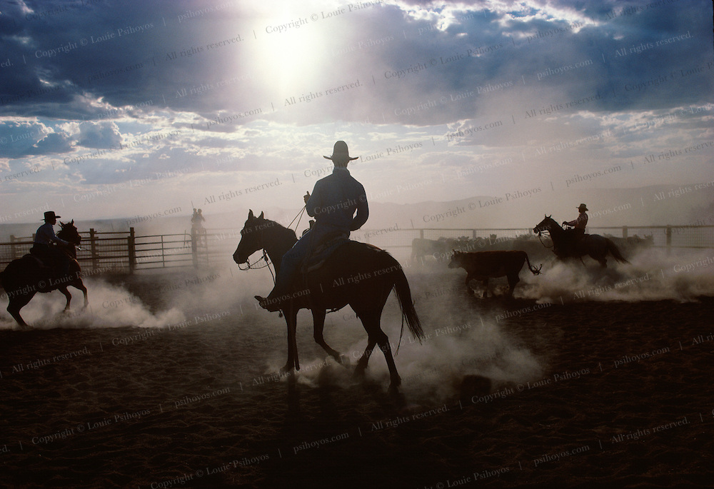 Cowboys cut cattle at the IL Ranch in Nevada.