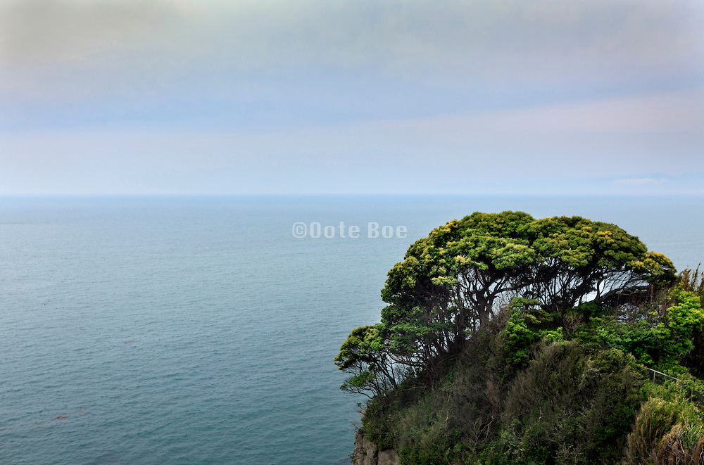 trees growing high on the edge of a rock overlooking the big open end empty sea Japan