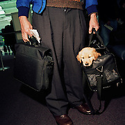 We see a male passenger from the waste down with a laptop computer in one hand and a Retriever puppy peering out from his owner's bag in the other, both human and pet are about to board a domestic flight from Chicago O'Hare airport. According to the American Transport Security Administration, taking pets into the aircraft cabin is permissable but the animal is required to be presented to the Security Officers at the checkpoint. it may also walk with its owner through the metal detector but not through the x-ray scanner. Picture from the 'Plane Pictures' project, a celebration of aviation aesthetics and flying culture, 100 years after the Wright brothers first 12 seconds/120 feet powered flight at Kitty Hawk,1903. .