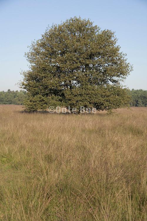 a single tree in the open field Holland