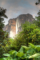 Angel Falls, Venezuela from the Churun River
