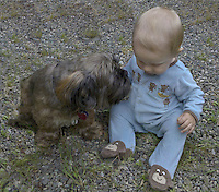 Hoodoo (Lhasa apso) and Grandson Talus Brubaker Book hanging out