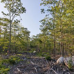 43.46898, -71.16095. Birch Ridge location D. Facing north. New Durham, New Hampshire.