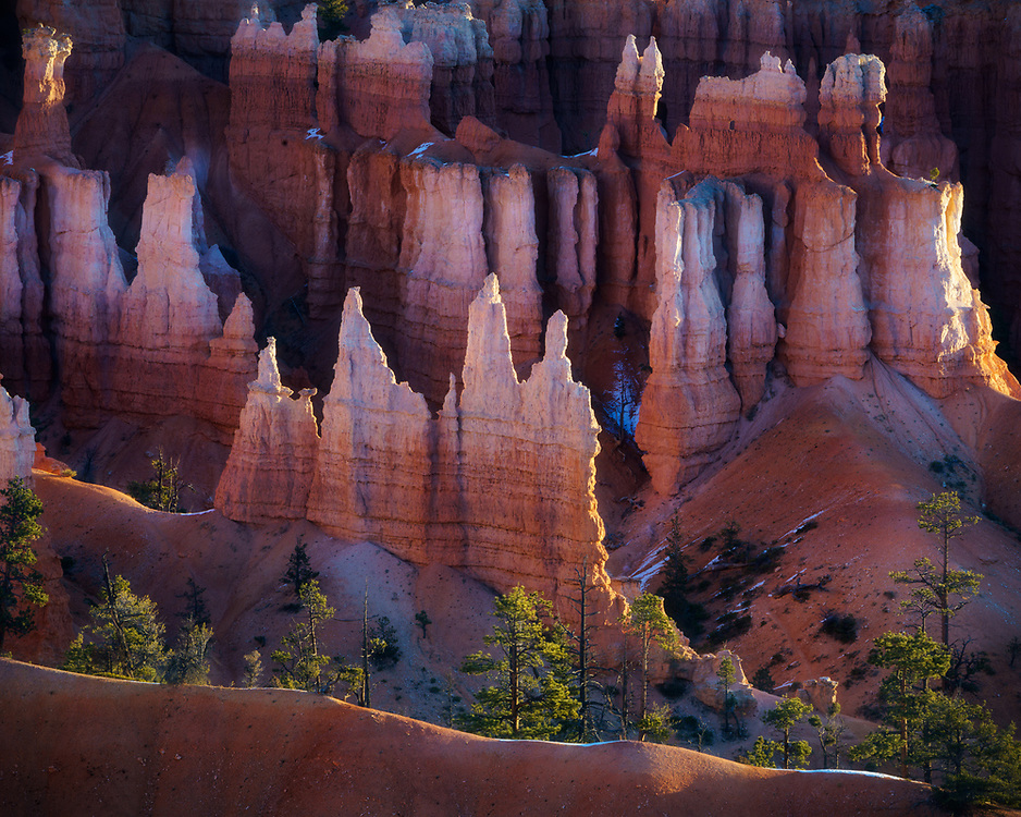 Early morning light reflecting from the hoodoos in Bryce Canyon, Bryce Canyon National Park, Utah, USA