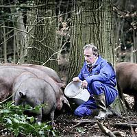 Nederland,Eerbeek ,25 januari 2008..Varkensboer Sjek Floor temidden van zijn Iberische varkens..Stock farmer Sjek Floor between his organic bred Iberian pigs.