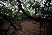 Parnamirim_RN, Brasil...Maior Cajueiro do Mundo em Parnamirim...The largest cashew tree in the world in Parnamirim...Foto: LEO DRUMOND / NITRO
