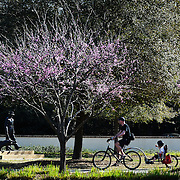 A Biker treks along a biking path as a child points to a statue of Charles E. Fraser and his alligator at Compass Rose Park on Hilton Head Island on March 18, 2015.