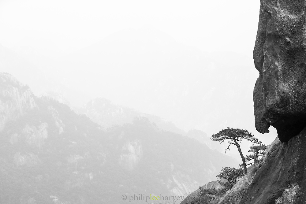 Majestic black and white landscape with view of an endemic pine tree growing on a cliff, Huangshan Mountain Range, Anhui Province, China