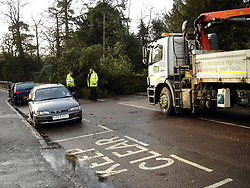 © Licensed to London News Pictures. 05/01/2012 Borehamwood, UK. The remains of a tree is cleared away in Shenley Village, Borehamwood, Herts after it collapsed onto a car injuring a mother and young girl as high winds and storms continued to batter the UK..Photo credit : LNP