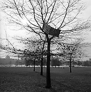 The work Diplomacy written on a makeshift sign has been left high up on a tree in Hyde Park after an anti-war protest.