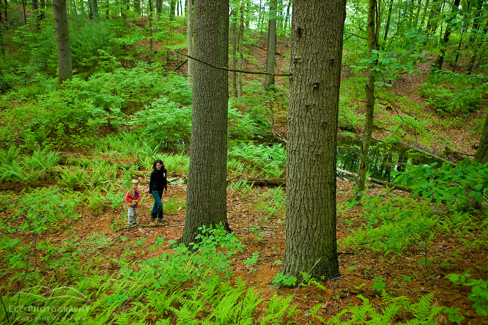 A woman and her young son explore a forest in Medfield, Massachusetts.