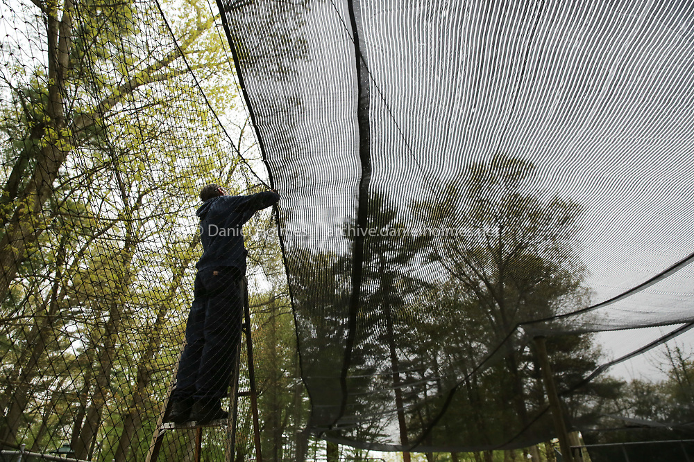 (5/18/20, MENDON, MA) T.J. Bonadei prepares the bird enclosure at Southwick's Zoo in Mendon on Monday. Despite COVID-19, the animals at the zoo need to be cared for daily. [Daily News and Wicked Local Photo/Dan Holmes]