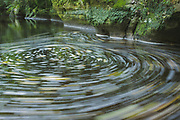 Circular current with fallen leaves in small river with sandstone banks