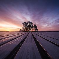 Crops under cover in a Suffolk Field