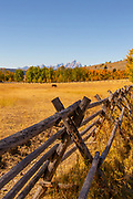 Wooden Rail Fence in Wyoming Meadow