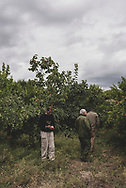 Three Armenian men stand in an orchard in a village near Agdam, located near the line of contact in the disputed territory of Nagorno-Karabakh.<br /><br />(September 24, 2016)