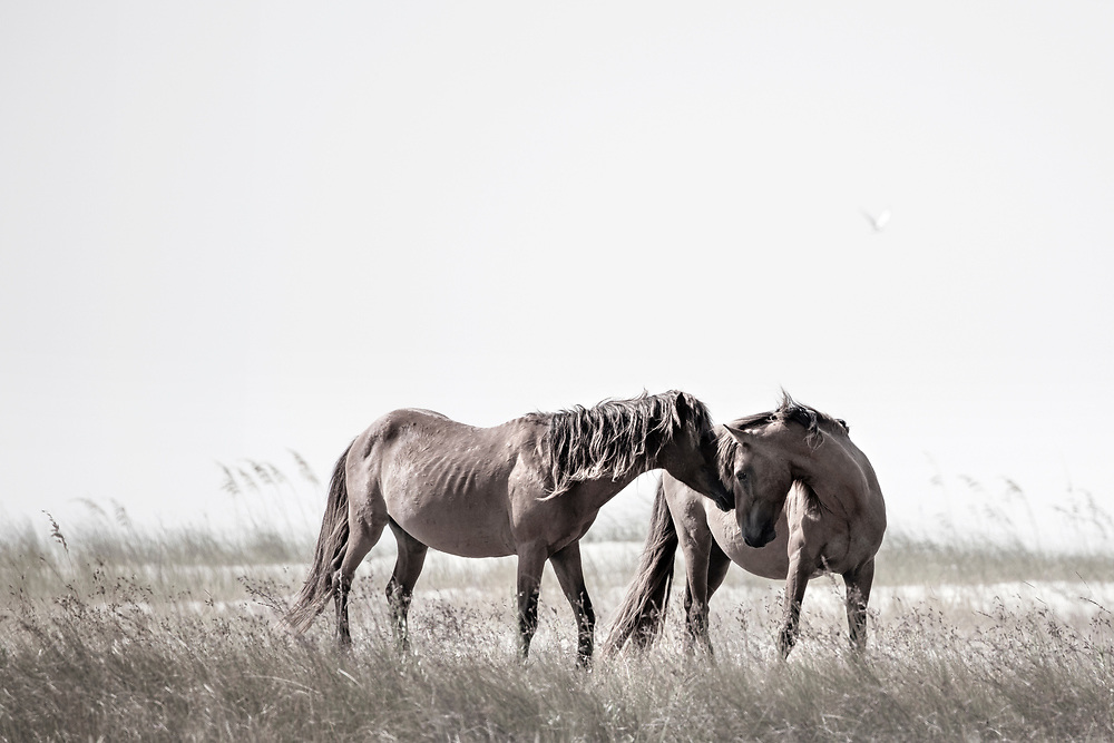 """""""When we lose one blessing, another is often most unexpectedly given in it's place""""  ~ C.S. Lewis<br /> <br /> Tracie Spence's fine art photography series of The Spanish Wild Mustangs."""