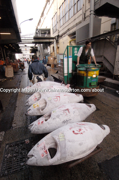 Transporting frozen tuna by barrow at the famous Tsukiji Fish Market in Tokyo Japan