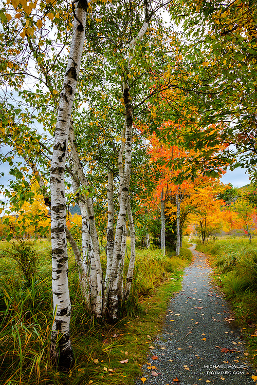 """TO PURCHASE: Simply click """"Add to Cart"""" to see prints and products available.<br /> <br /> Acadia National Park is an American jewel located on the stunning coast of Maine.<br /> <br /> The first national park located east of the Mississippi River it boasts views unlike anything on the eastern seaboard.<br /> <br /> This image was captured at the serene Jesup Path located in the heart of Acadia National Park. It's a popular, beautiful trail the hikes around The Great Meadow and encompasses some of the most serene and beautiful low key areas of the park.<br /> <br /> Camera Data:<br /> f/13, 0.6sec, 24mm, ISO100<br /> RAW, Manual Mode, Evaluative Metering<br /> Tripod, Bare Glass, Lr<br /> Canon 5ds, Canon EF 24-105mm<br /> <br /> High Resolution Image"""