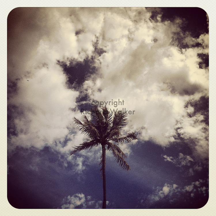 2012 October 01 - Palm tree against a cloudy sky in Hawaii, USA. Taken with Apple iPhone using Instagram App. By Richard Walker