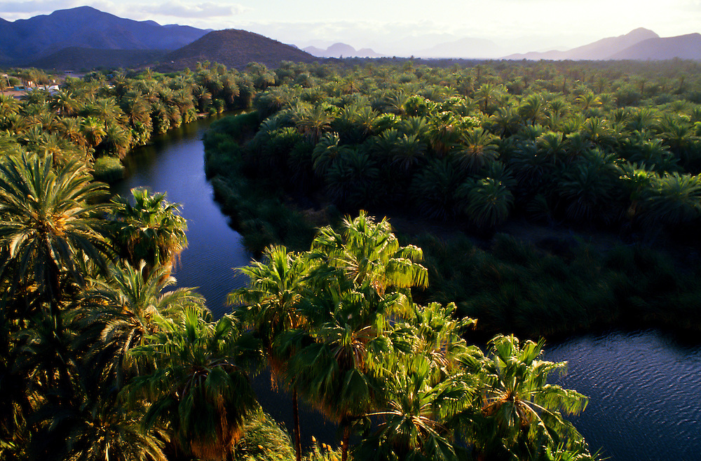Trees and greenery lining the river in Baja California.