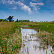 Everglades national park marshes