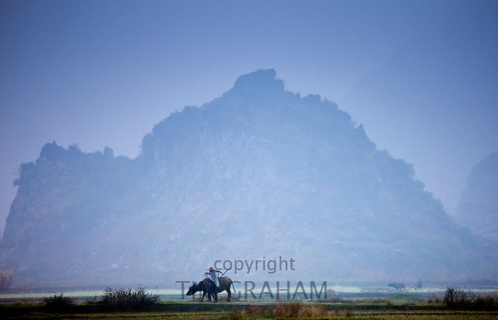 Farmer uses a buffalo to pull plough through a crop field near Fuli, Xingping, China