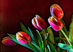 An assortment of fresh tulips with revealing details and traced outter Incandescent Highlights