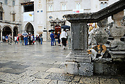Cat climbs on stone steps and balustrade, Dubrovnik old town, Croatia