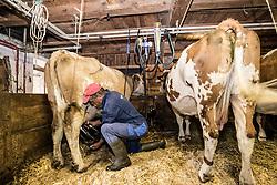 """THEMENBILD - Milch, die unter der populären Hofer-Marke """"Zurück zum Ursprung"""" verkauft wird, muss künftig ausschließlich von Kühen stammen, die 365 Tage im Jahr Auslauf haben. Das bedingt entweder einen Laufstall, oder – bei sogenannter """"Anbindehaltung"""" einen täglichen Spaziergang für das Rindvieh, der nur bei sehr extremen Wetterbedingungen ausfallen darf. hier im Bild Bio Landwirt Alois Groder beim Melken der Kühe. Kals, Montag 8. Oktober 2018 // Milk sold under the popular Hofer brand """"Back to Origin"""" will in future only have to come from cows that have an outlet 365 days a year. This requires either a playpen, or - in so-called """"tethering"""" a daily walk for the cattle, which may fail only in very extreme weather conditions. Picture shows Organic farmer Alois Groder the cows being milked. Kals, Austria on Monday, October 8, 2018. EXPA Pictures © 2018, PhotoCredit: EXPA/ Johann Groder"""
