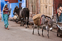 Indian woman walking down the street with donkey and cow, Jodhpur, India. Exotic destinations wall art. Fine art photography prints for sale, stock images