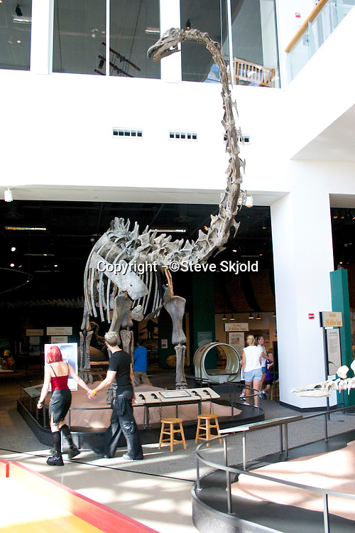 Prehistoric Diplodocus Dinosaur from the Jurassic Period displayed at the Science Museum.  St Paul Minnesota USA