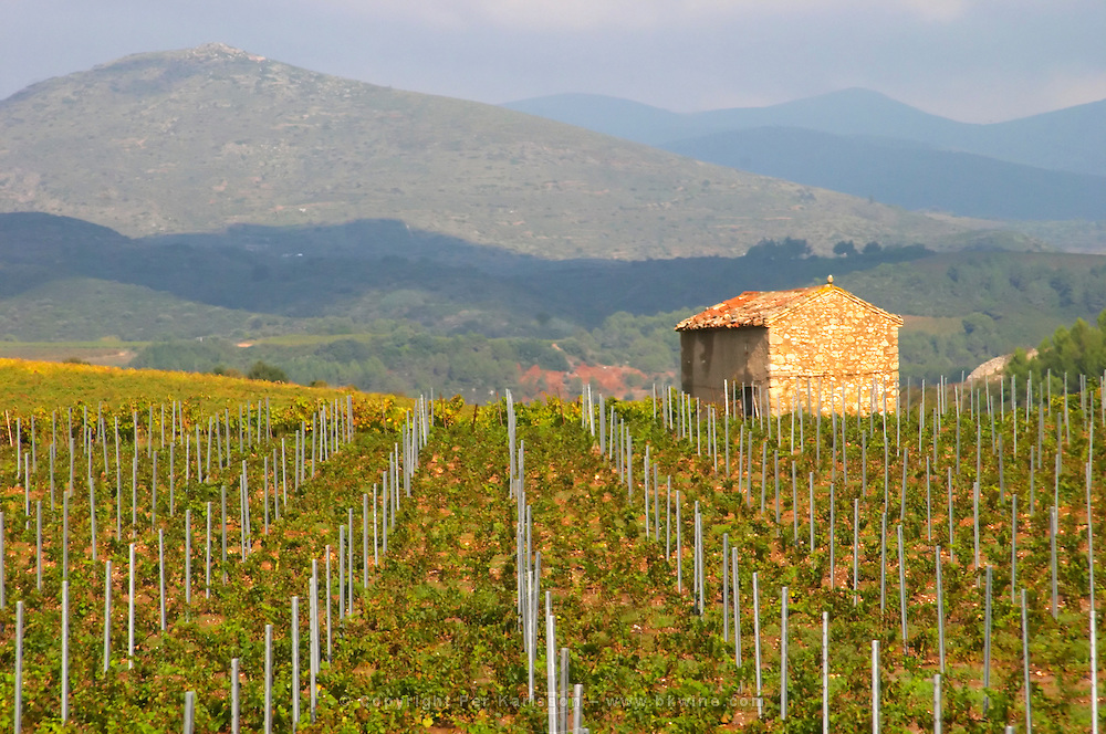 St Chinian. Languedoc. France. Europe. Vineyard with mountains in the background. A vineyard hut. Mountains in the background.