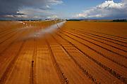 Sao Gotardo_MG, 28 de abril de 2015<br /> <br /> Fotos dos produtores de cenoura na regiao de sao gotardo.<br /> <br /> Foto: MARCUS DESIMONI / NITRO