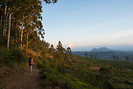A young woman carrying a backpack and DSLR camera walks above tea fields at sunset during a visit to Nuwara Eliya, Sri Lanka