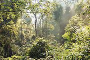 Jungle in Nyungwe National Park, Rwanda