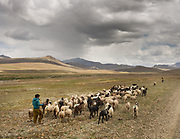 Gujar nomads  in the Deosai plains, taking their herds of goats and sheep.