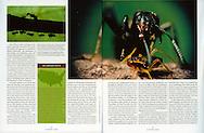 Publication: Sueeddeutsche Zeitung WISSEN (Germany), 15/2007, Photography by Heidi & Hans-Juergen Koch/animal-affairs.com