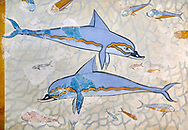 The Minoan 'Dolphin Fresco' wall art from the Queen's Megaron, Knossos Palace, 1600-1450 BC. Heraklion Archaeological Museum.<br /> <br /> Two dolphins are depicted swimming amongst small fish . .<br /> <br /> If you prefer to buy from our ALAMY PHOTO LIBRARY  Collection visit : https://www.alamy.com/portfolio/paul-williams-funkystock/minoan-art-artefacts.html . Type -   Heraklion   - into the LOWER SEARCH WITHIN GALLERY box. Refine search by adding background colour, place, museum etc<br /> <br /> Visit our MINOAN ART PHOTO COLLECTIONS for more photos to download  as wall art prints https://funkystock.photoshelter.com/gallery-collection/Ancient-Minoans-Art-Artefacts-Antiquities-Historic-Places-Pictures-Images-of/C0000ricT2SU_M9w