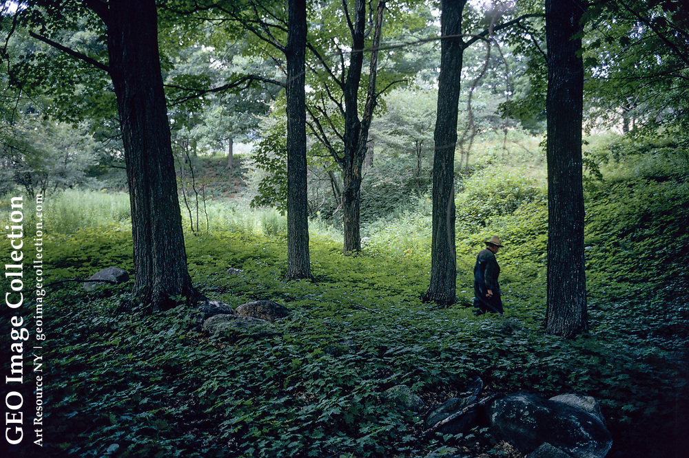 Retired Yankee farmer Theron Boyd walks through shaded forest and groundcover on his farm in Quechee, Vermont on August 3, 1973. Mr. Boyd is a poor but stubborn Yankee individualist character who refused to sell his 35 acre farm to real estate developers.