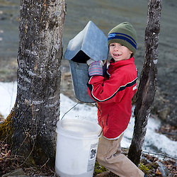 A boy checks a sap bucket in Strafford, Vermont.