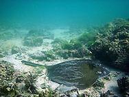 Ray underwater in the Galapagos, Ecuador, Island Isabela, Puerto Villamil.