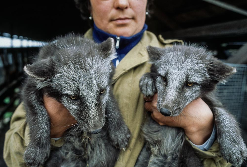 Fox farm, Village of Sireniki, Chukotsk Peninsula, Northeast Russia