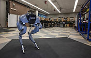 The robot Tallahassee Cassie sits in the CISCOR robotics lab at the FAMU-FSU College of Engineering Center for Intelligent Systems, Control and Robotics (CISCOR) lab in Tallahassee, Florida.