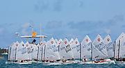 Races Day 2, Optinam 2013, Bermuda, © Matías Capizzano
